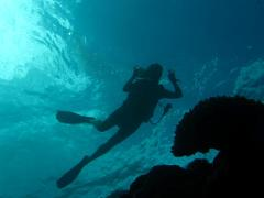 1 dive excursion