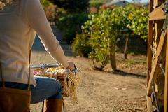 Gourmet Cycling Deluxe - Clare Valley or Barossa - 3 day