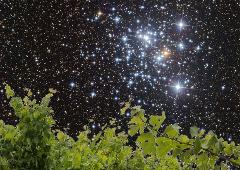 Stars and Vines + minibus transport