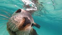 Fisherman's Island Sea Lion and Snorkel Tour