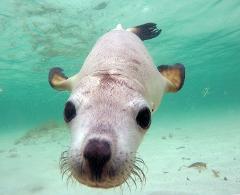Sea Lion Interaction Tour