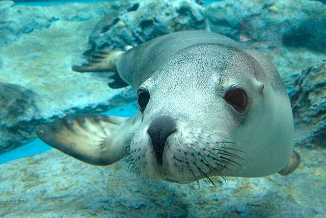Essex Rocks Sea Lion Tour