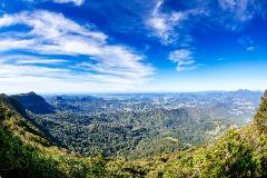 Day Tour: Gold Coast Hinterland - 7 hours