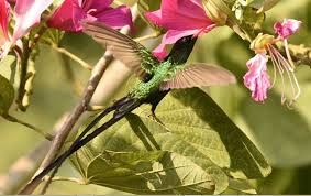 Barney's Humming Bird Garden with Ricks Café (From Negril)
