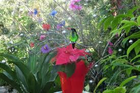 Bird_on_flower