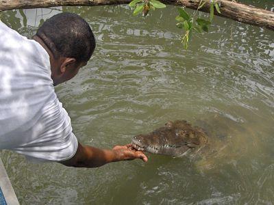Black_River_Safari_Jamaica_opt