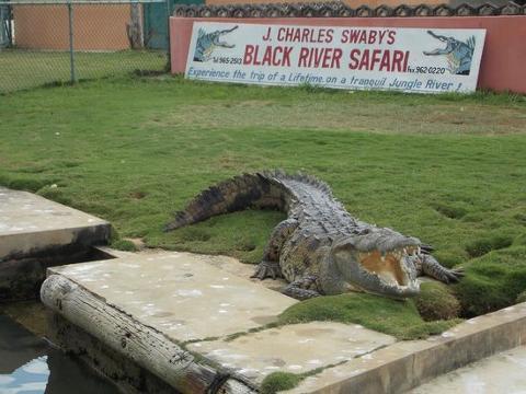 Black_river_croc