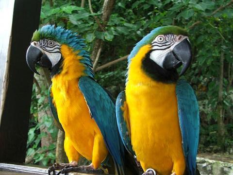 Dolphin_Cove_Parrots