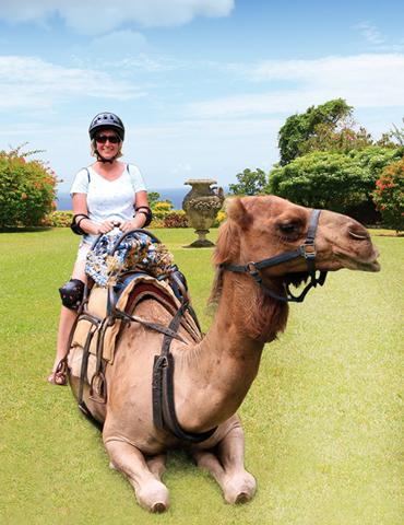camel_ride_in_jamaica_at_yaaman_park