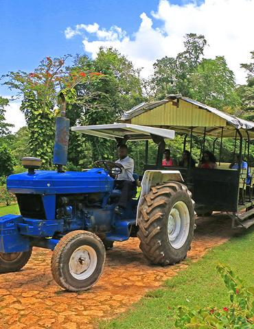 jitney_plantation_tour_yaaman_adventure_kingdom