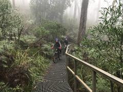 Mt. Lofty Wheels & Wildlife e-mountain bike tour