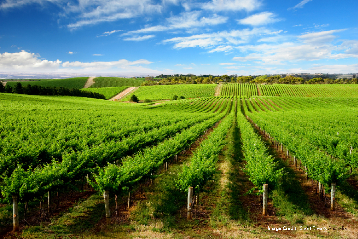 Barossa & McLaren Vale Luxury Cycle Escape