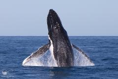 3 Hour Sunset Humpback Whale Watching Tour