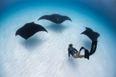 Ningaloo Adventure and Manta Ray Tour-Full Day