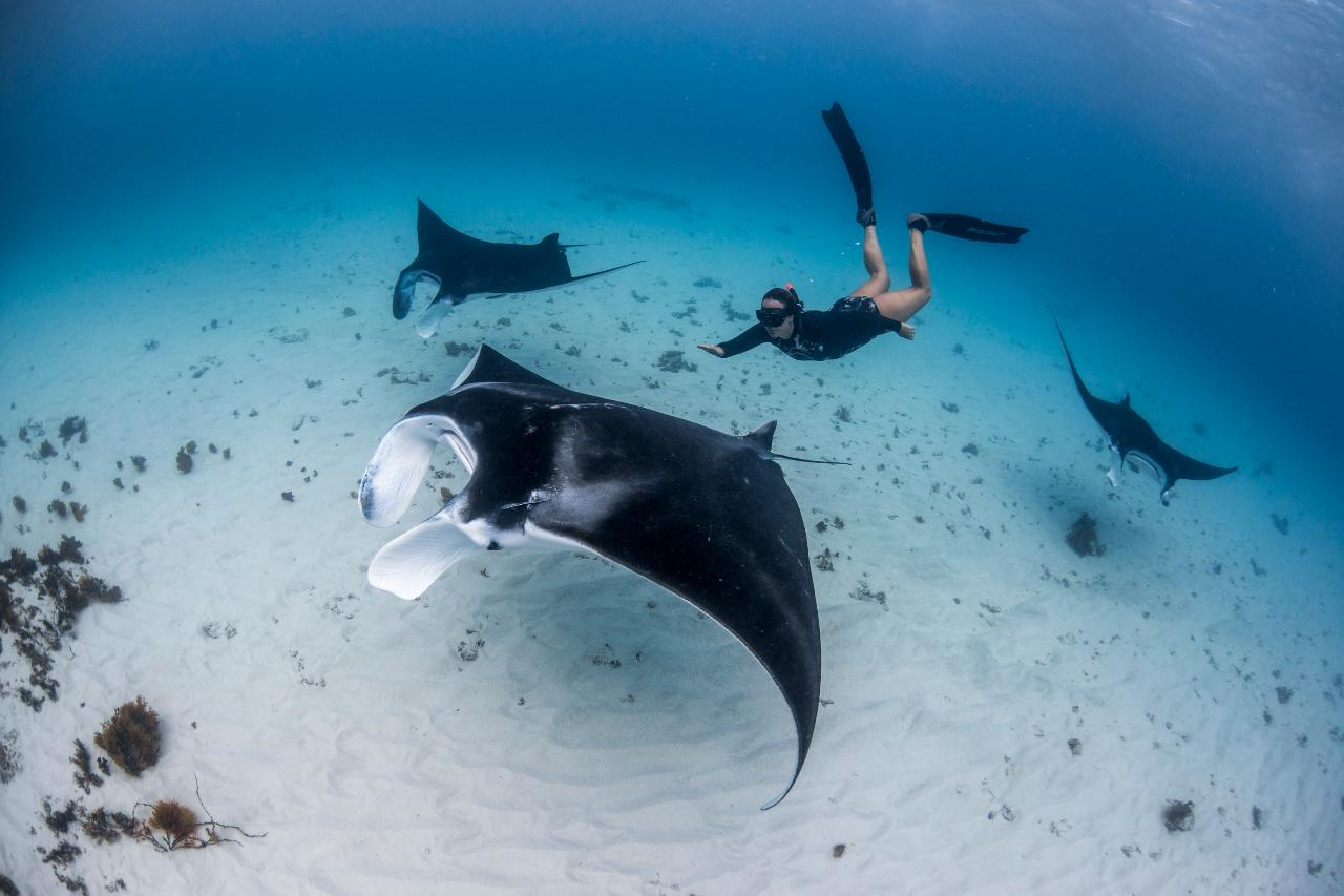 Ningaloo Adventure and Manta Ray Tour- Half Day