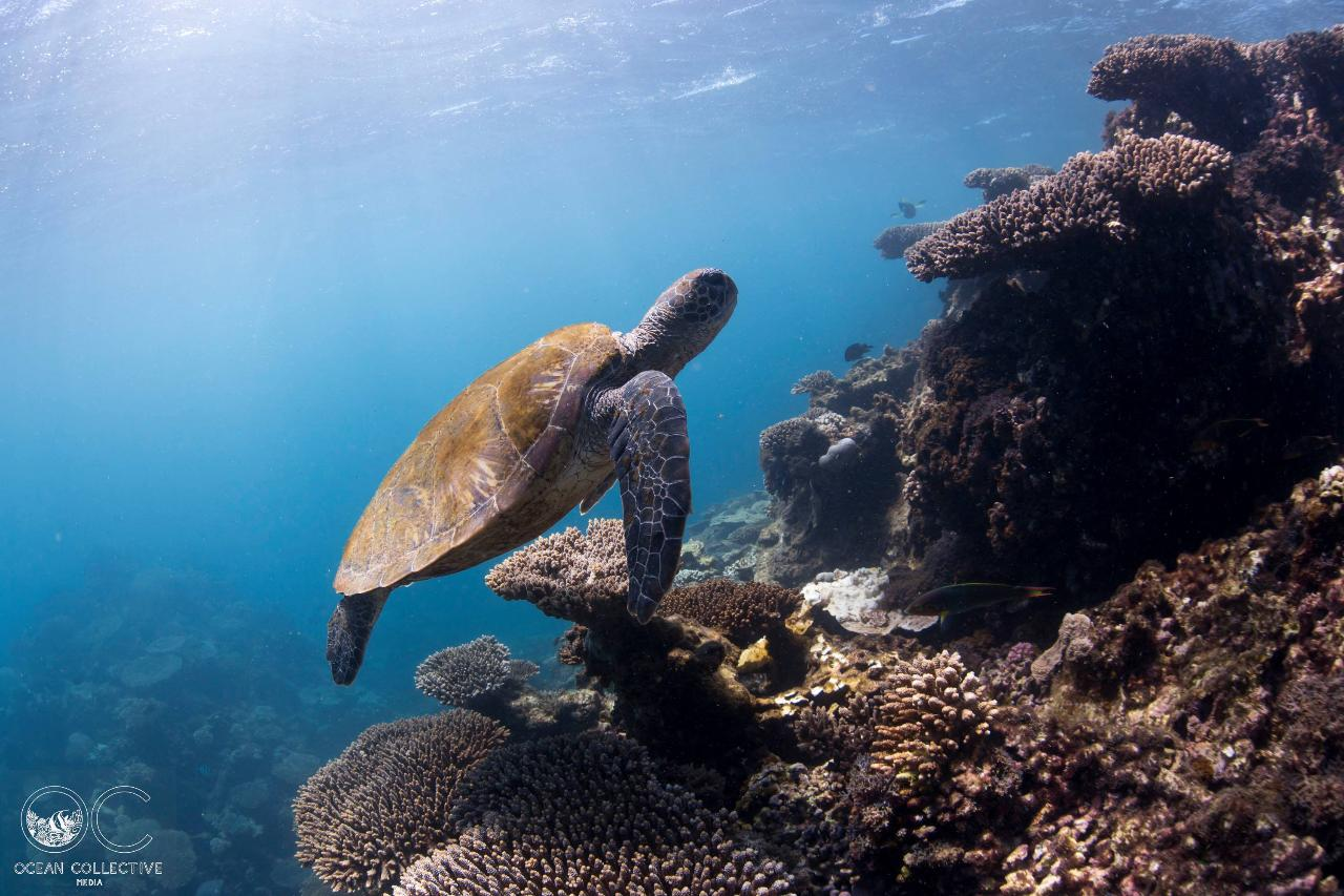 Two Dives or Snorkels on the Ningaloo Reef