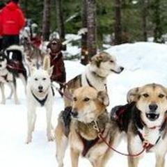 Dog Sled - Trappers Run