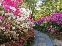 Spring Time In The Gulf Coast- FESTIVAL OF FLOWERS *New Orleans  & Festval of Flowers Included