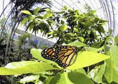 Kanapaha Spring Garden Festival, Harn Museum & Butterfly Gardens