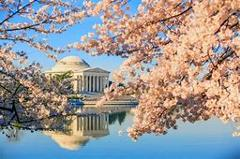 April 8 – 12, 2021  Cherry Blossom Festival & Parade in Washington D.C.- by Air