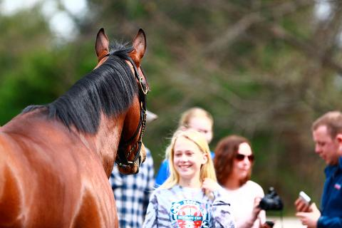 American Pharoah Private Tour