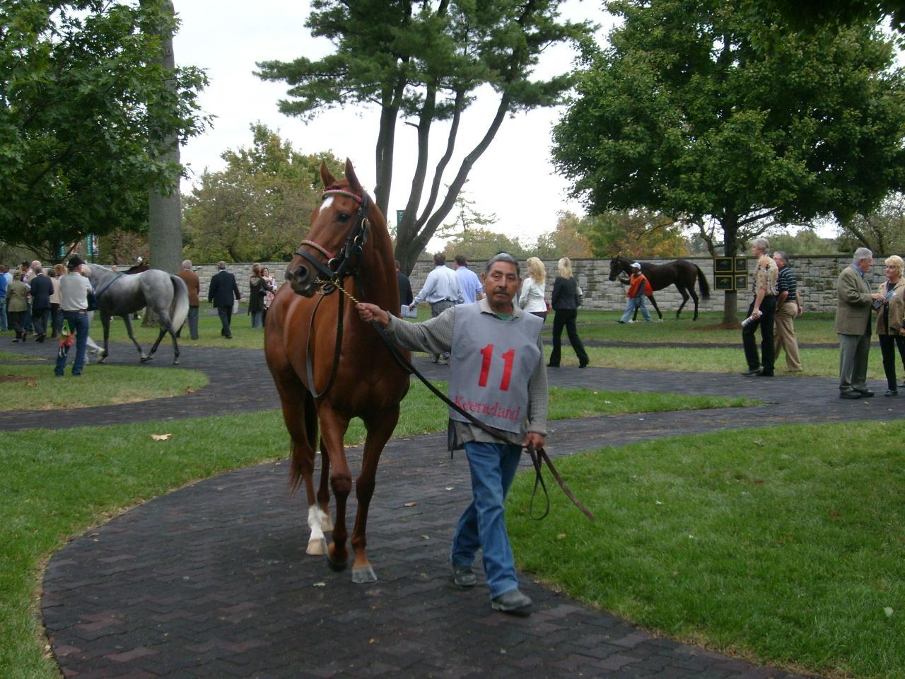 Horse farm tours of the kentucky bluegrass thoroughbred for Horse farm