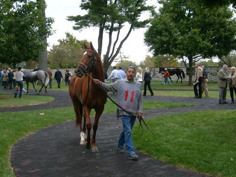 Thoroughbred Heritage Horse Farm Tours of the Bluegrass