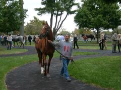 Horse Farm Tours of the Kentucky Bluegrass
