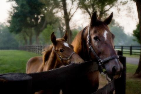 Thoroughbred Heritage Horse Farm Tours