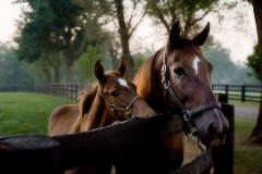 Horse Farm Tours of the Kentucky Bluegrass