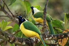 Ecuador-Nature Program