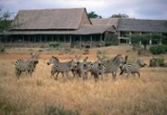 Family Safari-Kenya