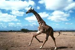 Big Five Safari-Kenya