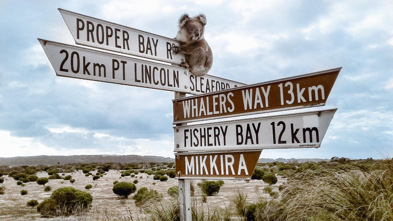 Xplore Eyre – 1-Day Port Lincoln Tour