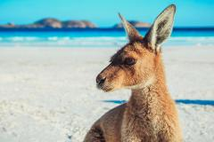 Xplore Eyre - Perth to Adelaide 9 Day Private Tour - The Great Australian Wilderness Journey
