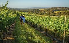 Xplore Eyre – 4-Day Margaret River & Great Southern Private Luxury Tour
