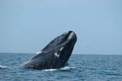 Xplore Eyre: 3 Day Head of Bight Whale Watching Private Tour