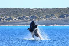 Xplore Eyre – 3-Day Whale Watching Tour