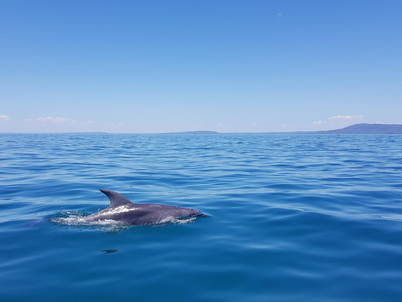 1.5hr Dolphin and Seal Eco Boat Tour