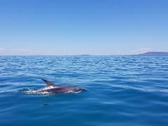 1.5hr Dolphin and Seal Eco Adventure Cruise