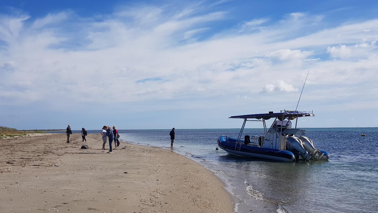 2.5hr Mud Island Walk and Cruise