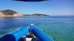 2hr Great Victorian Fish Count Seal Swim and Reef Snorkel Tour