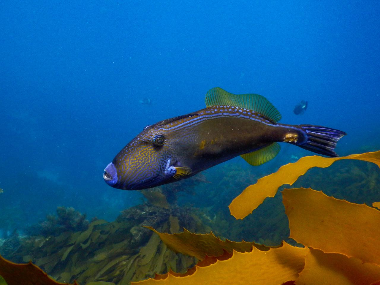 Private 1.5hr Pope's Eye Marine Park Guided Reef Snorkelling Boat Tour from Sorrento