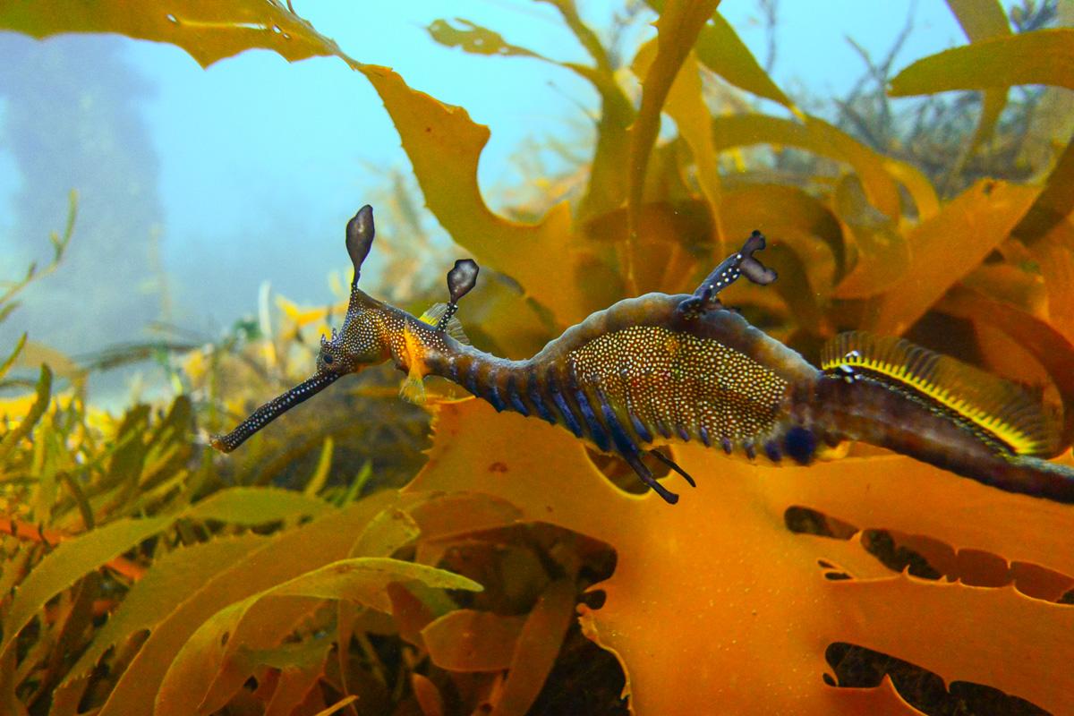 Dolphin Cruise, Seal Swim and Reef Snorkel Adventure