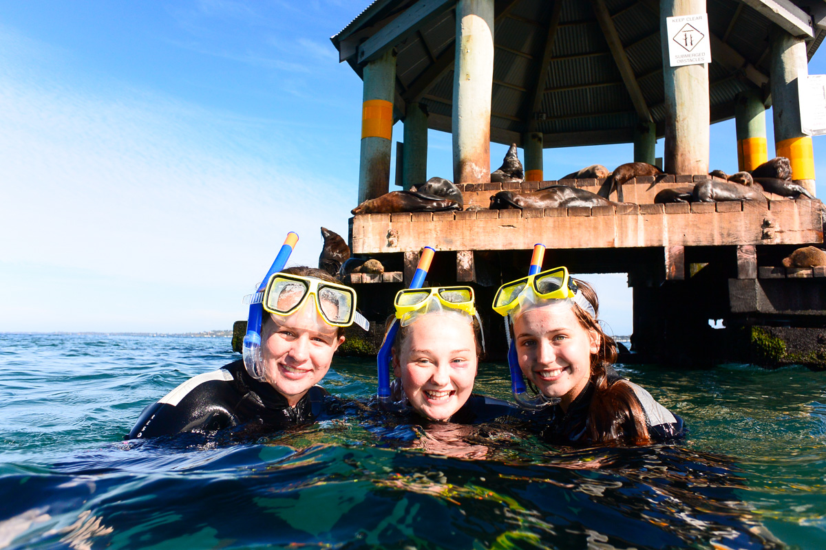 2hr Dolphin Cruise, Seal Swim and Reef Snorkel Tour