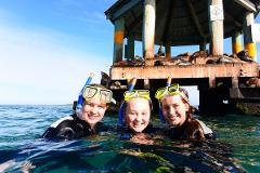 2hr Dolphin Cruise, Seal Swim and Reef Snorkel Adventure