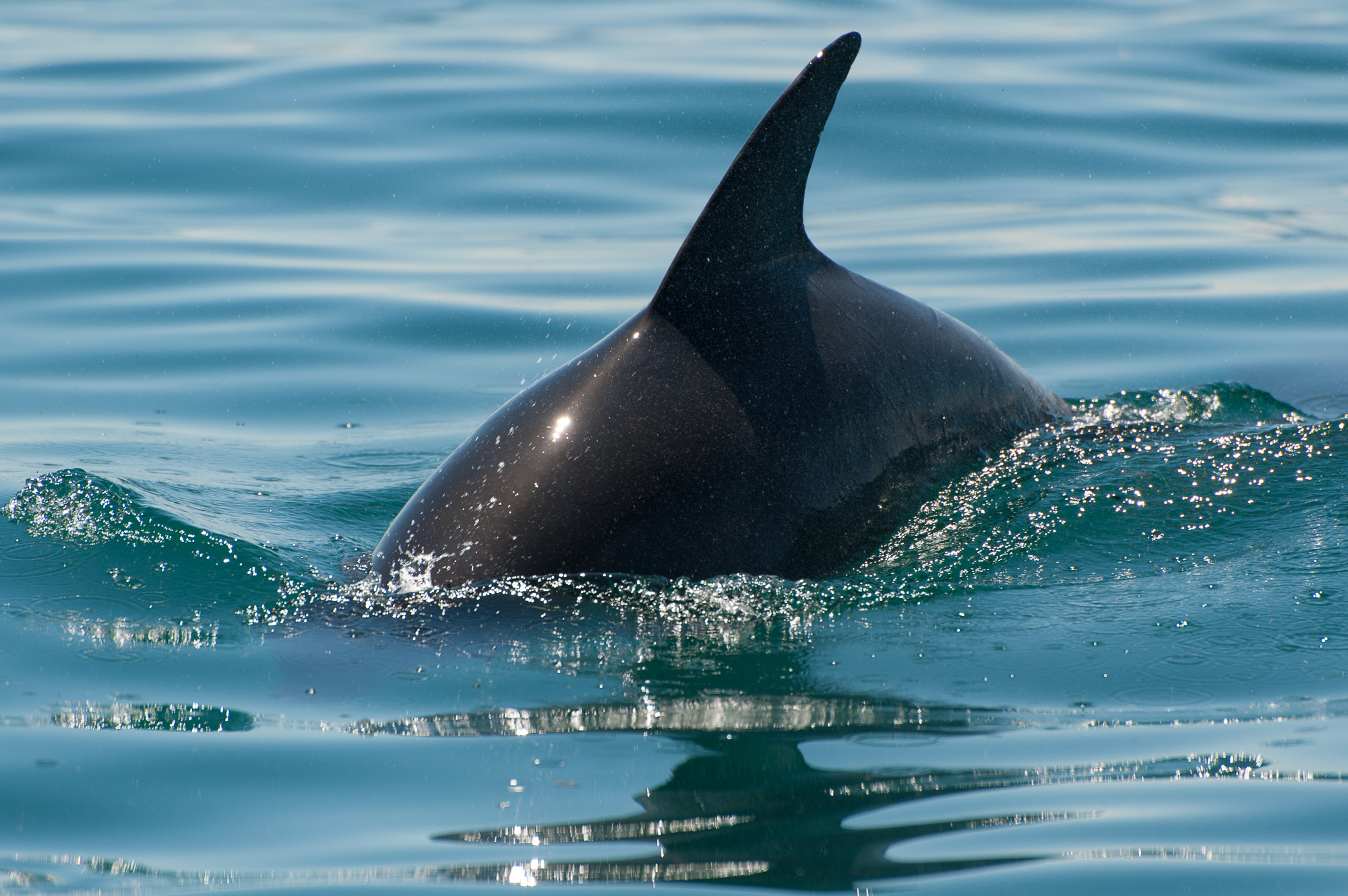 1.5hr Dolphin and Seal Watching Eco Boat Tour Mornington Peninsula