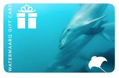 WaterMaarq Gift Card $100