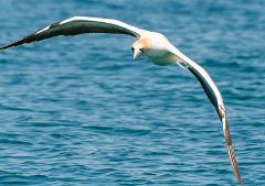 2.5hr Island Hop Birdlife Cruise