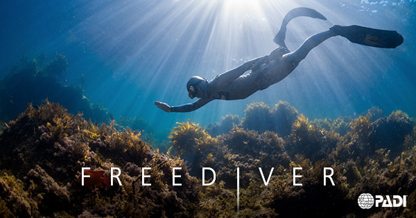 1-Day PADI Basic Freediver Course (Cheltenham)